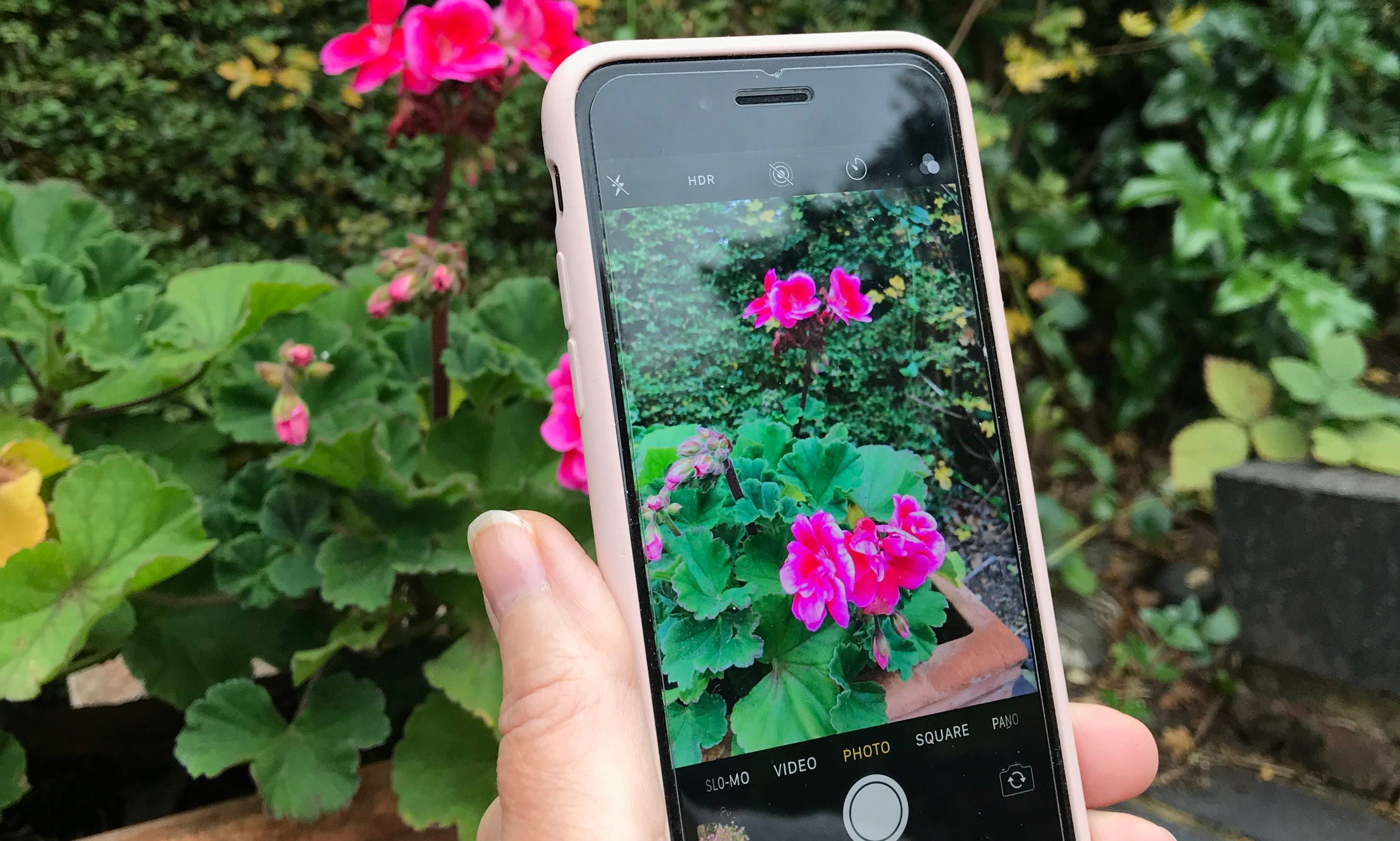 Plant identification and advice at your fingertips: 3 of the best free gardening apps