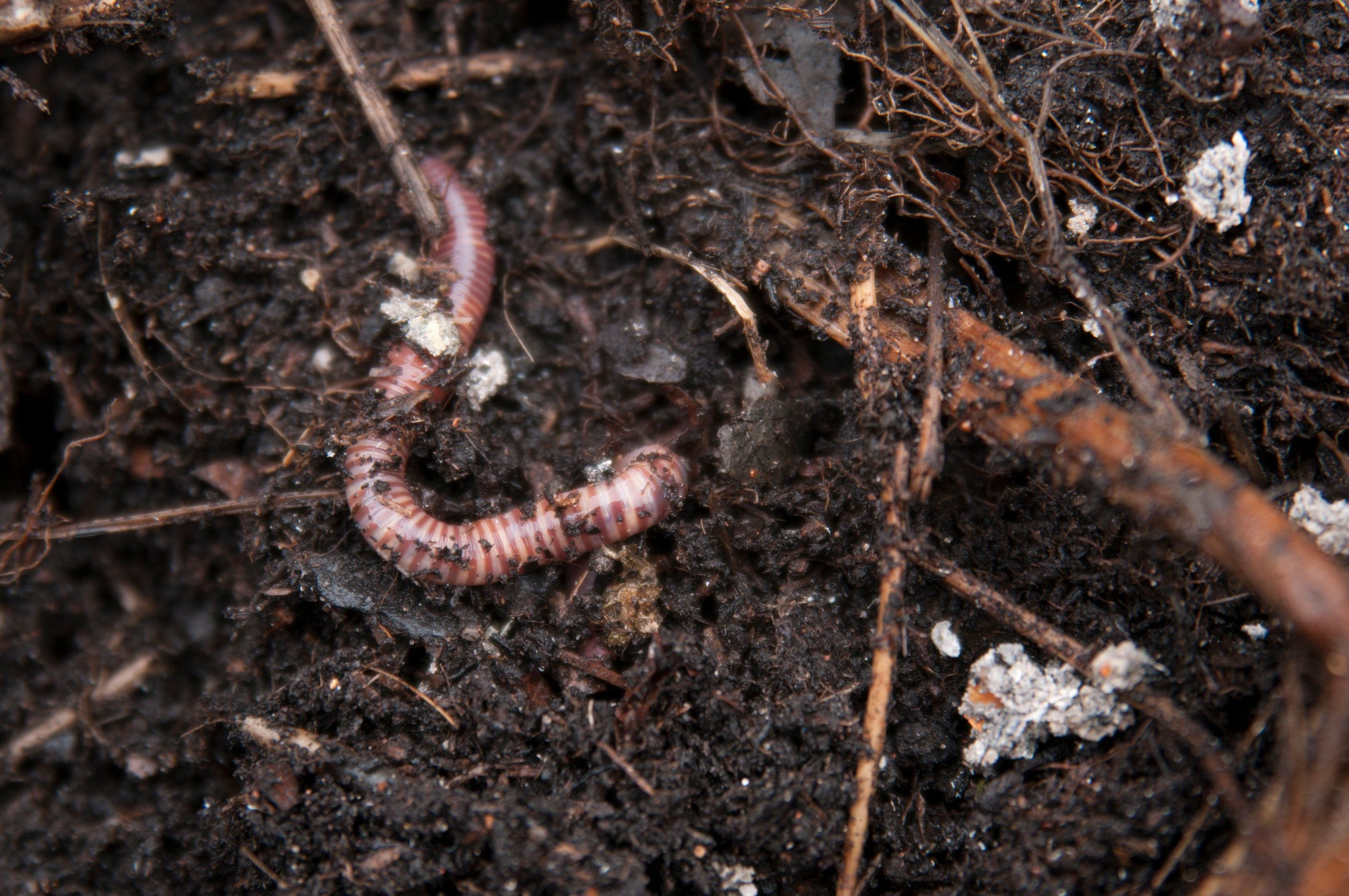 Weird and wonderful worm facts – and how to make your garden a magnet for them